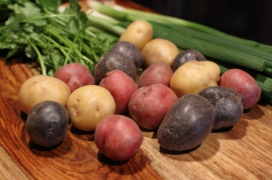 Small and colorful potatoes, before going into the pot